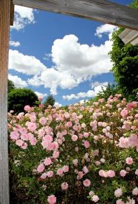 pink-roses-768182-print