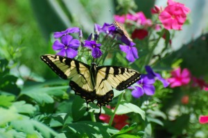 butterfly-768202-print