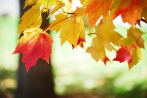 autumn-leaves-830489-print