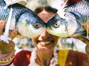 bengali-bride-fish_85702_990x742