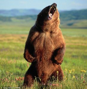 Grizzly Bear Pic 1
